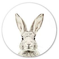 Groovy Magnets magneetsticker konijn