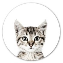 Groovy Magnets magneetsticker poes